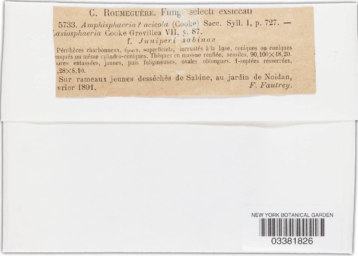 Amphisphaeria acicola image
