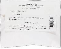 Diatrype disciformis image