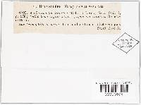 Anthostomella lugubris image