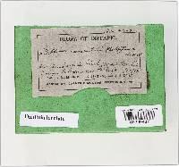 Daldinia loculata image