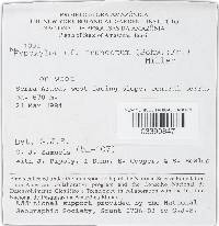 Annulohypoxylon moriforme image