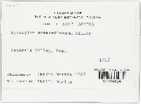 Hypoxylon novemexicanum image