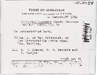Bisporella discedens image