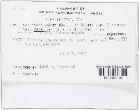 Crocicreas cyathoideum image
