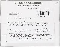 Crocicreas dolosellum image