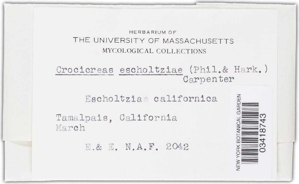 Crocicreas eschscholziae image