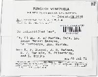 Hymenoscyphus caudatus image