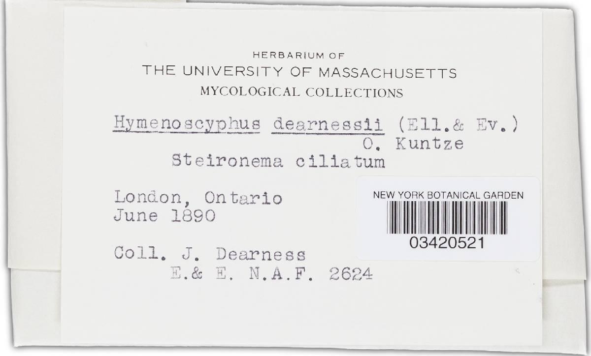 Hymenoscyphus dearnessii image