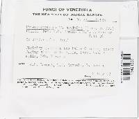 Hymenoscyphus scutulus image