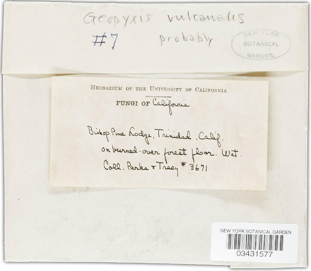 Geopyxis vulcanalis image