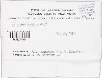 Image of Humaria rubricosa
