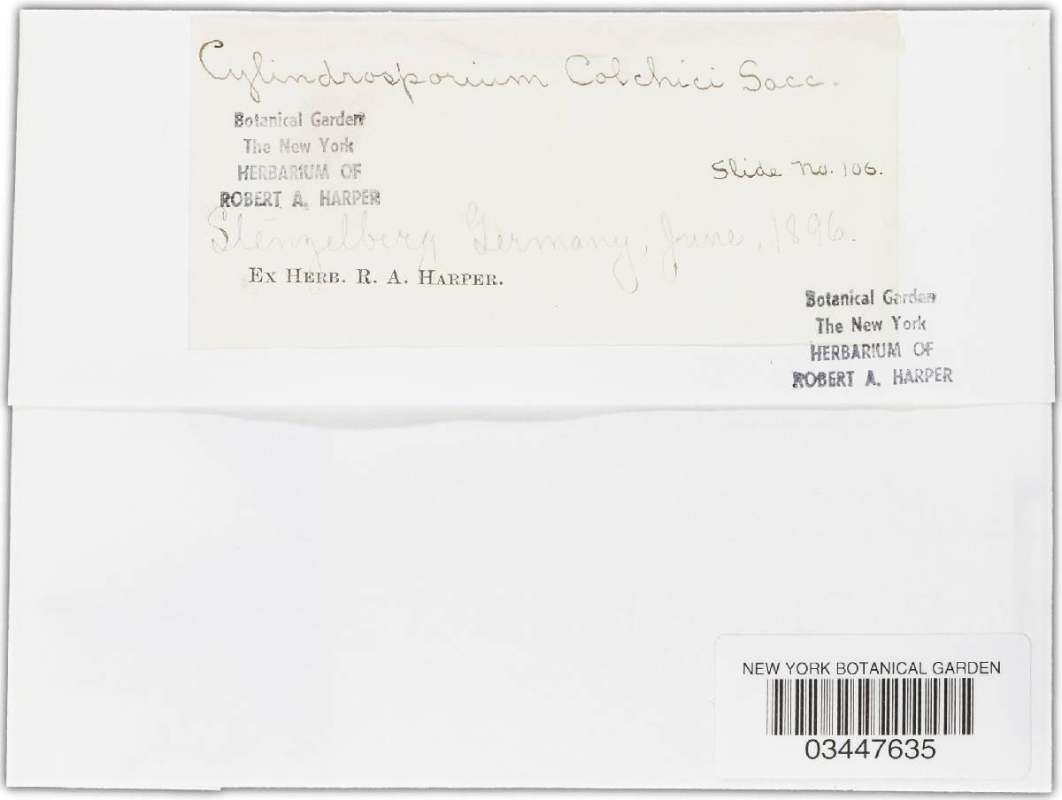 Cylindrosporium colchici image