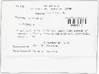 Mycogone cervina image