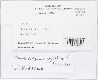 Pseudodidymaria clematidis image