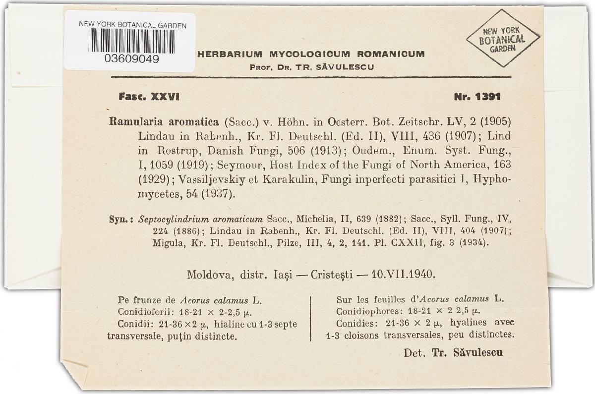Ramularia aromatica image