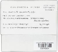 Image of Ramularia vancouveriae