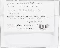 Hypomyces chlorinus image