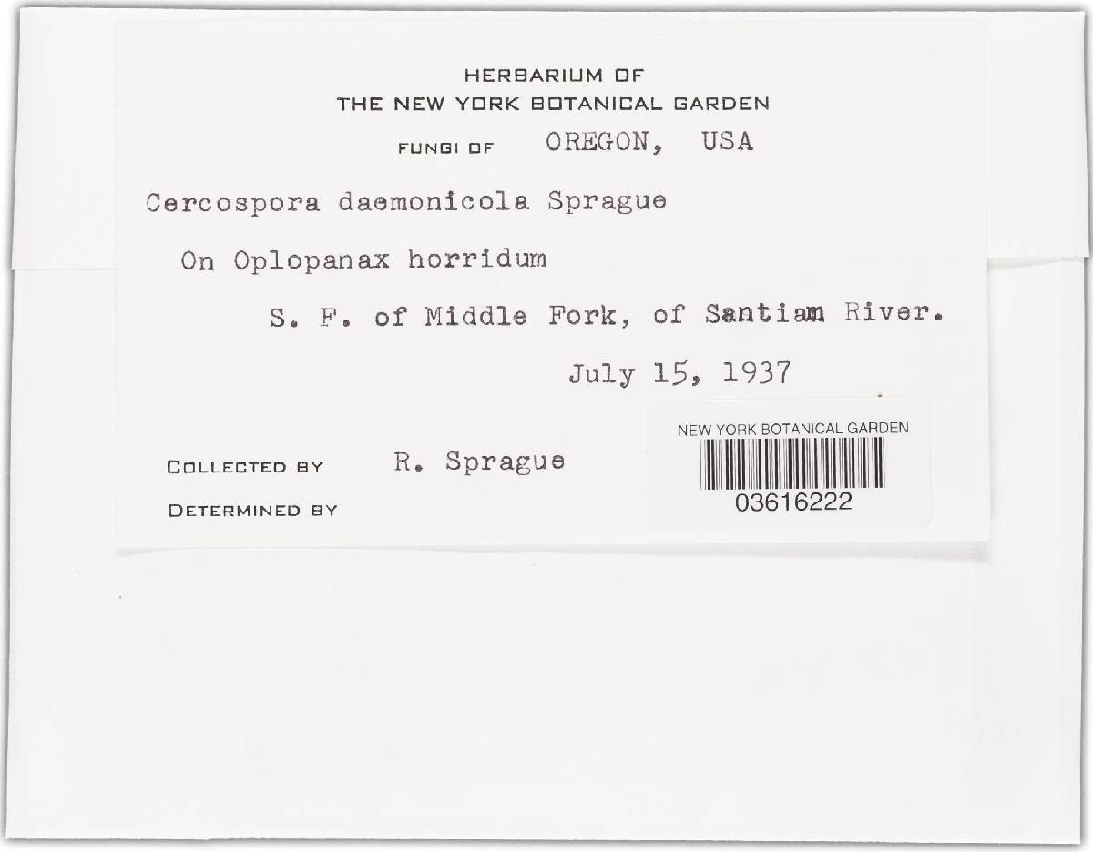 Cercospora daemonicola image