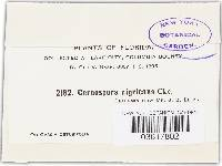 Pseudocercospora nigricans image