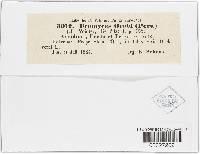 Uromyces viciae-fabae var. orobi image