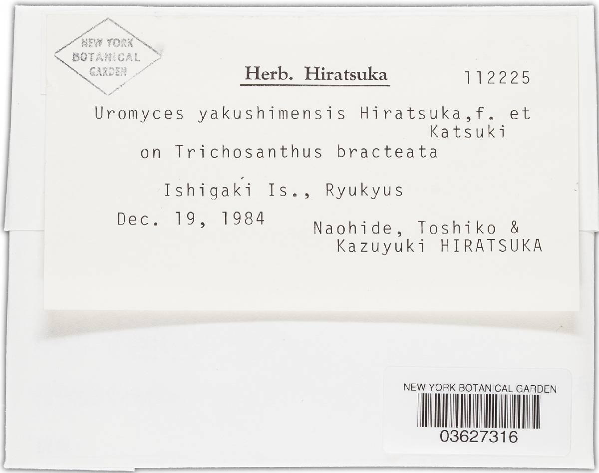 Uromyces yakushimensis image