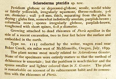Scleroderma pteridis image