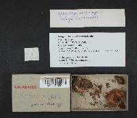 Cortinarius bulliardii image