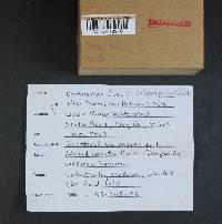 Cortinarius subpurpureus image