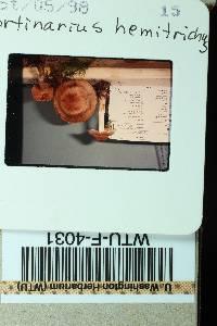 Cortinarius hemitrichus image