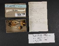 Pholiota albivelata image