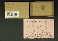 Inocybe maculata image