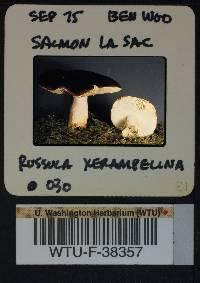 Russula xerampelina image