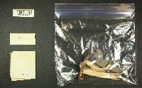 Russula murrillii image