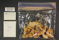Russula lilacea image