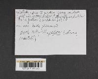 Cortinarius spadiceus image