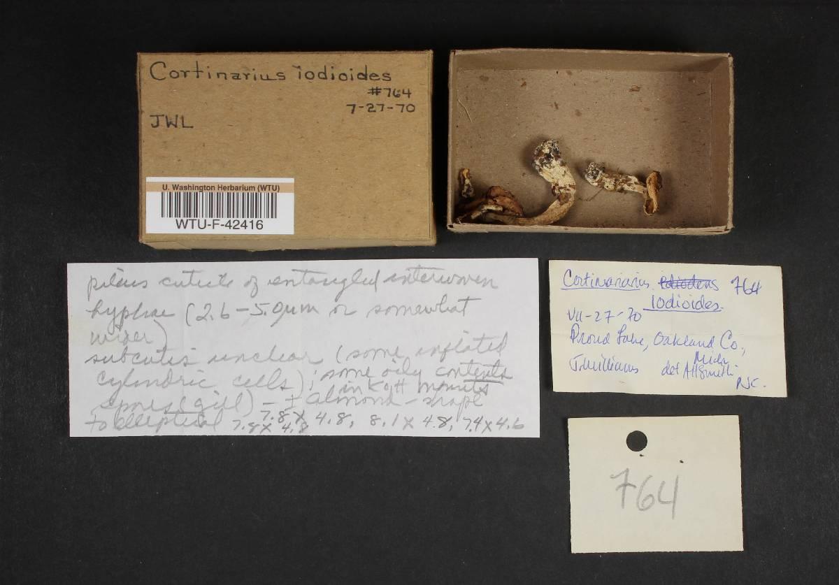 Cortinarius iodeoides image