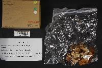 Cortinarius absarokensis image