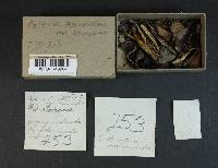 Coprinopsis acuminata image