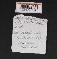 Geastrum welwitschii image