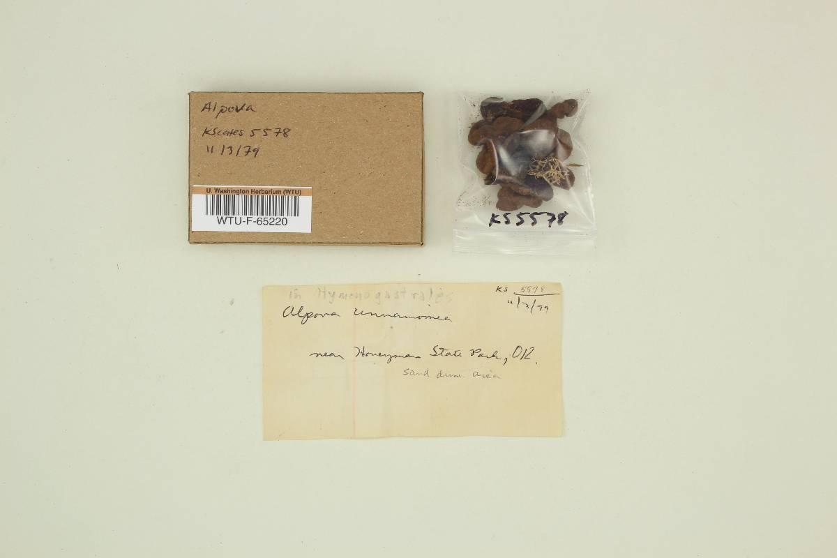 Alpova cinnamomeus image