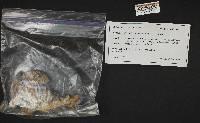 Hygrophorus inocybiformis image