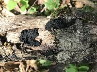 Exidia glandulosa image