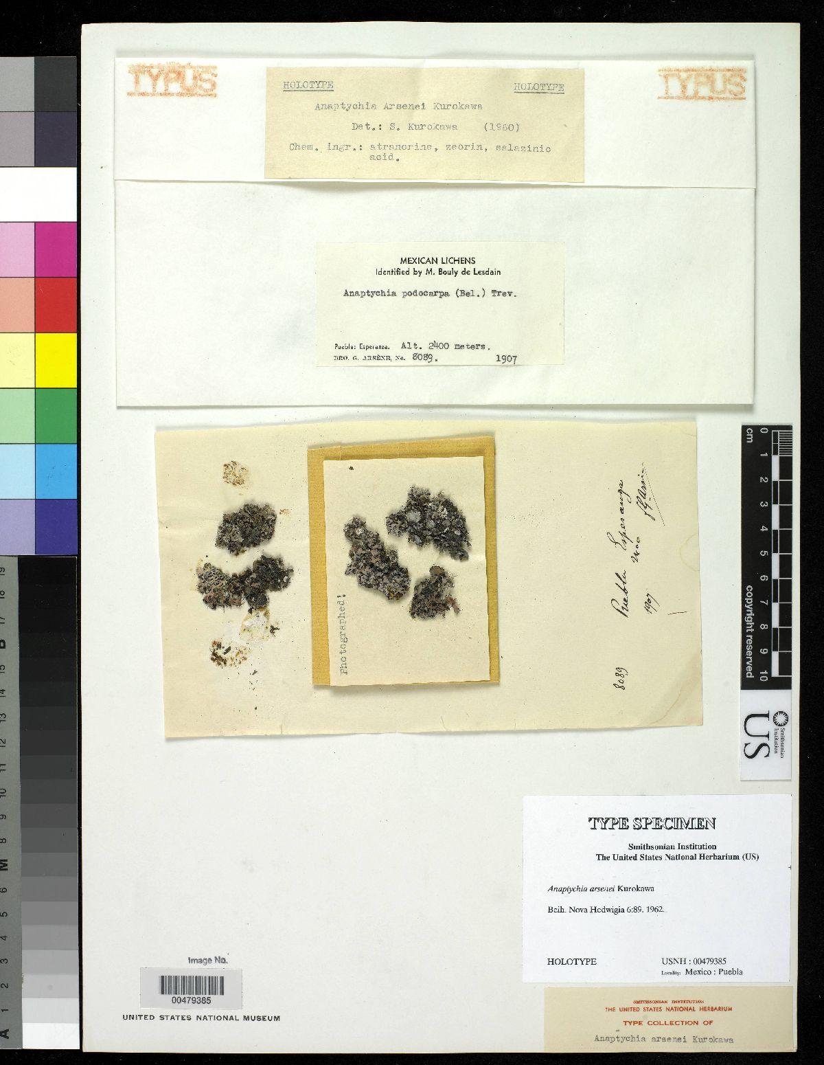 Anaptychia arsenei image
