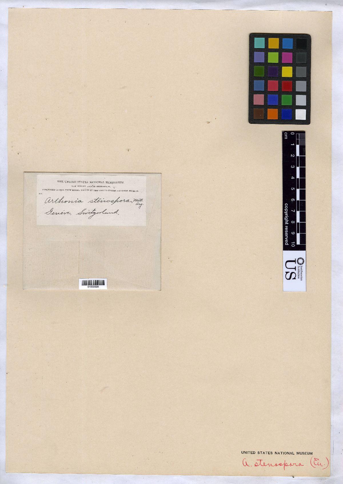 Arthonia stenospora image
