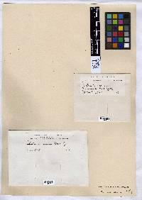 Arthonia varians image