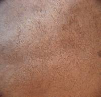 Russula smithii image