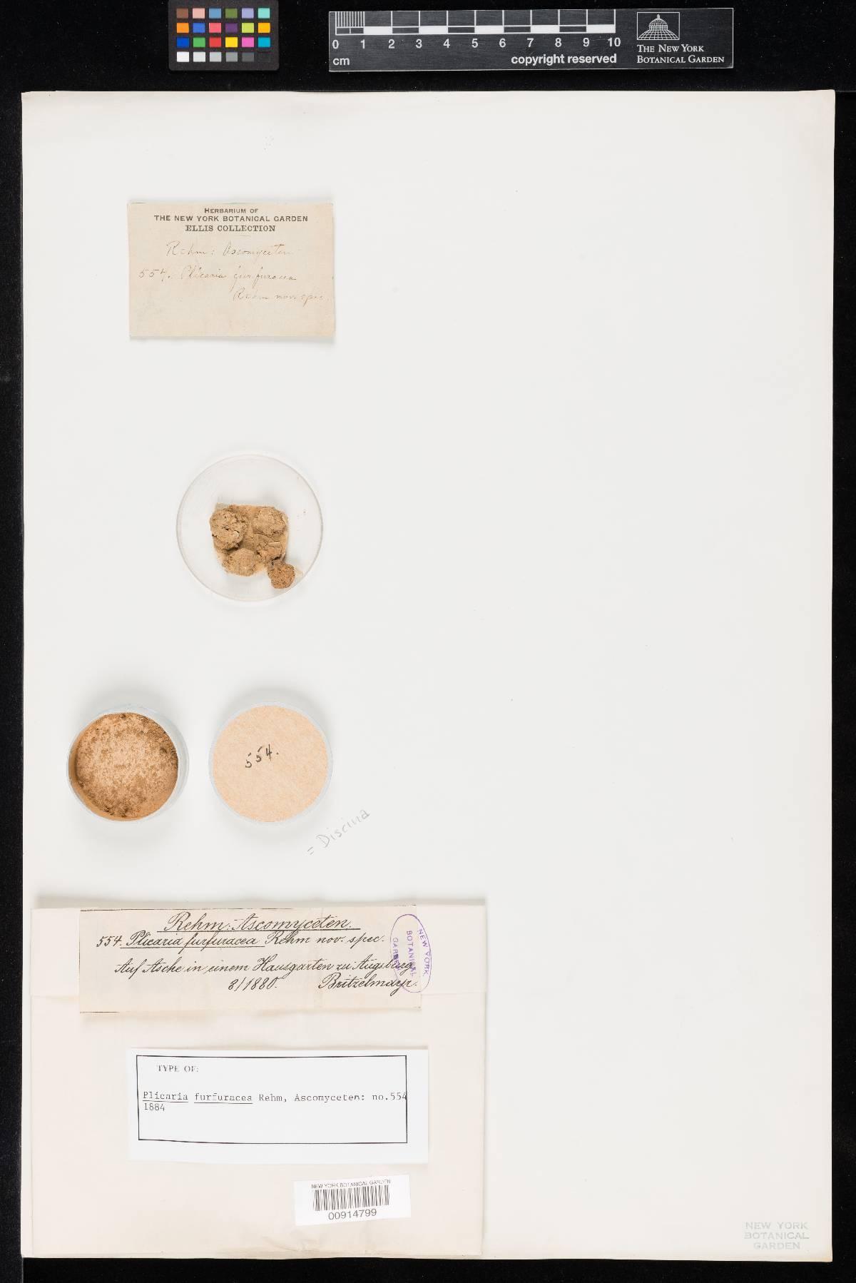 Plicaria furfuracea image