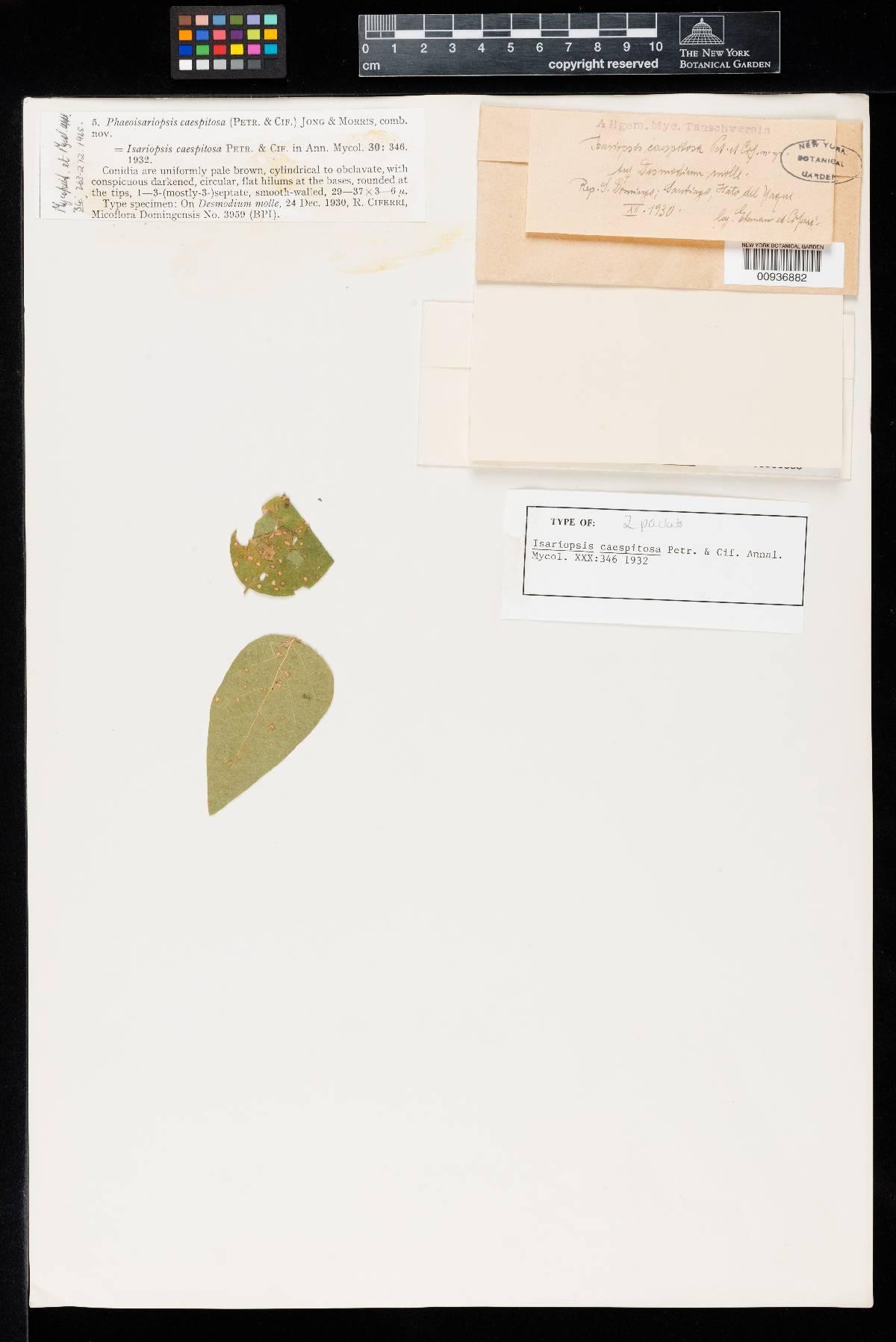 Isariopsis caespitosa image