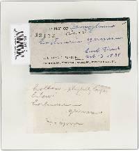 Cortinarius germanus image