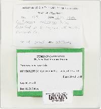 Cortinarius malicorius image